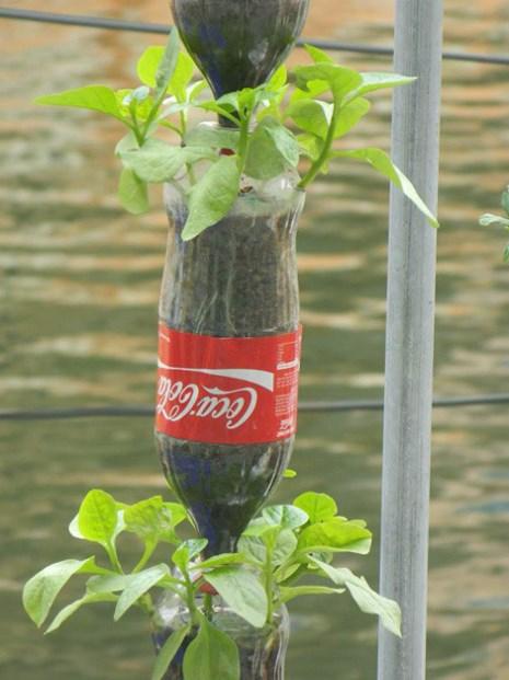 Các kiểu trồng rau sạch của dân đô thị