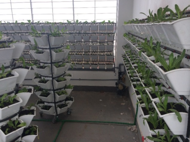 tại sao nên trồng rau sạch tại nhà