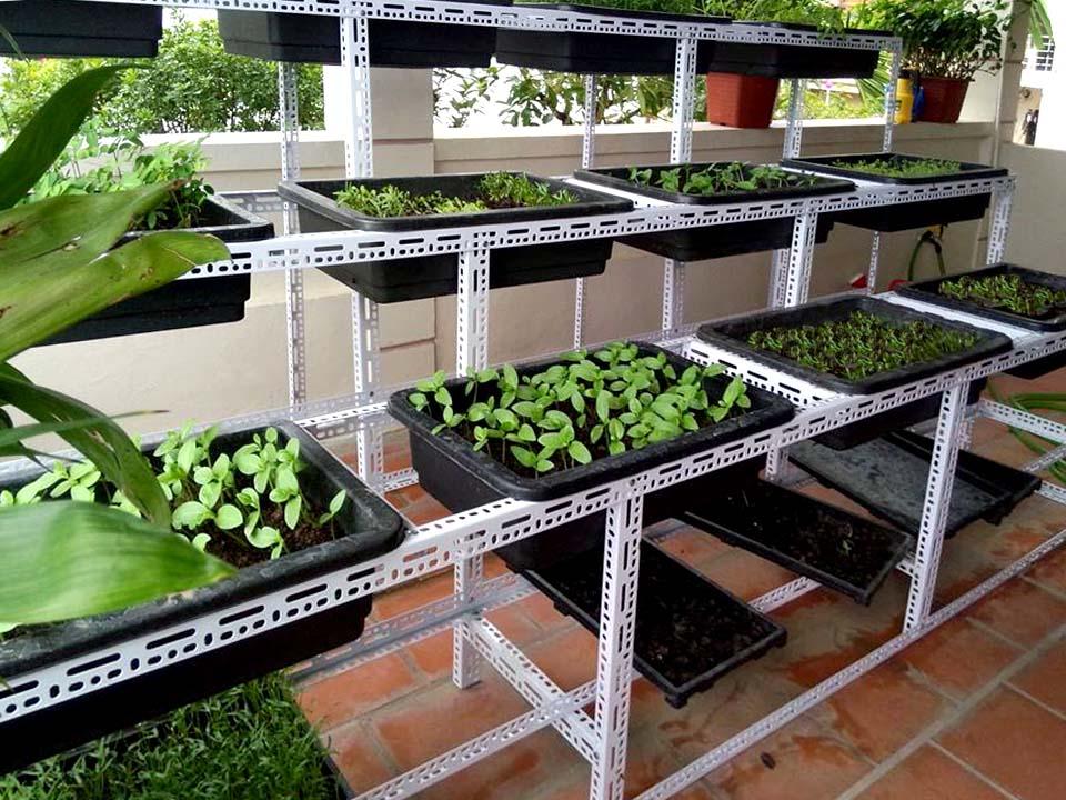 thi công vườn rau sạch tại nhà