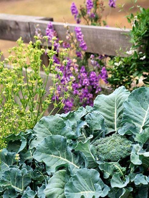 các loại rau trồng mùa đông