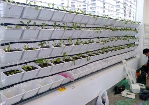 trồng rau sạch tại nhà trọn gói