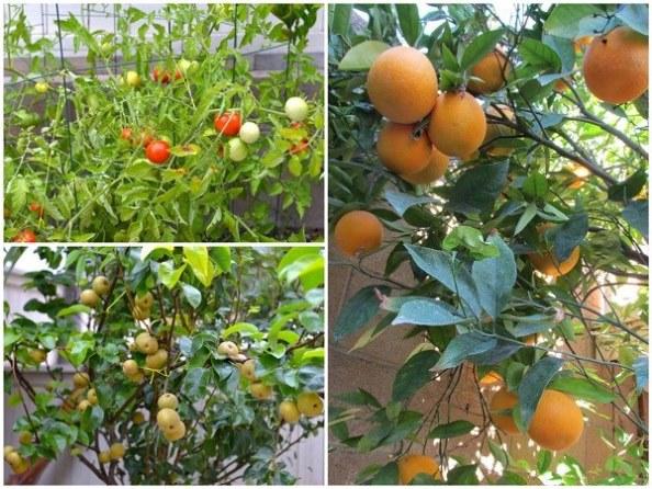 vườn rau sạch của sao Việt