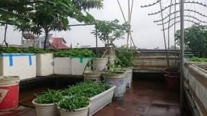 kinh nghiệm trông rau trên sân thượng