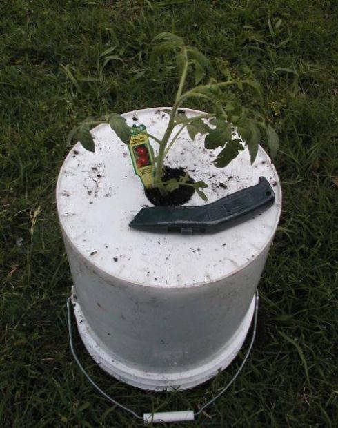 mẹo nhỏ trồng cà chua treo ngượcmẹo nhỏ trồng cà chua treo ngược
