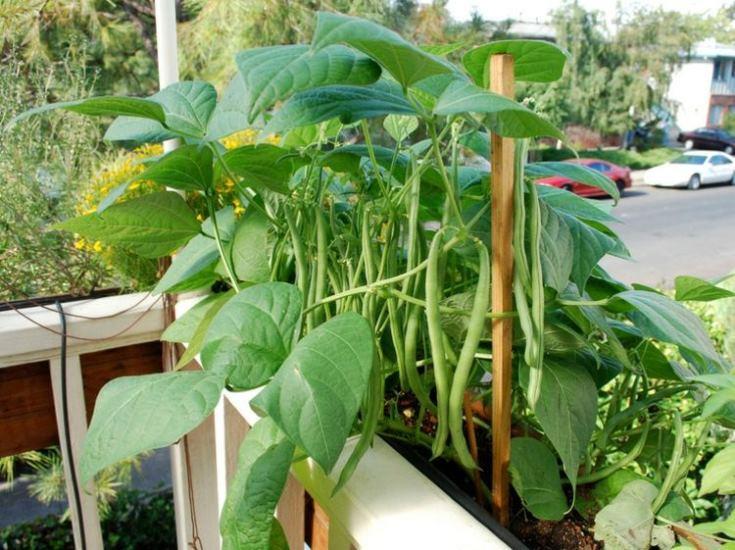 Mẹo trồng rau làm vườn trên sân thượng