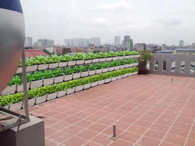 phụ kiện trồng rau sạch tại nhà