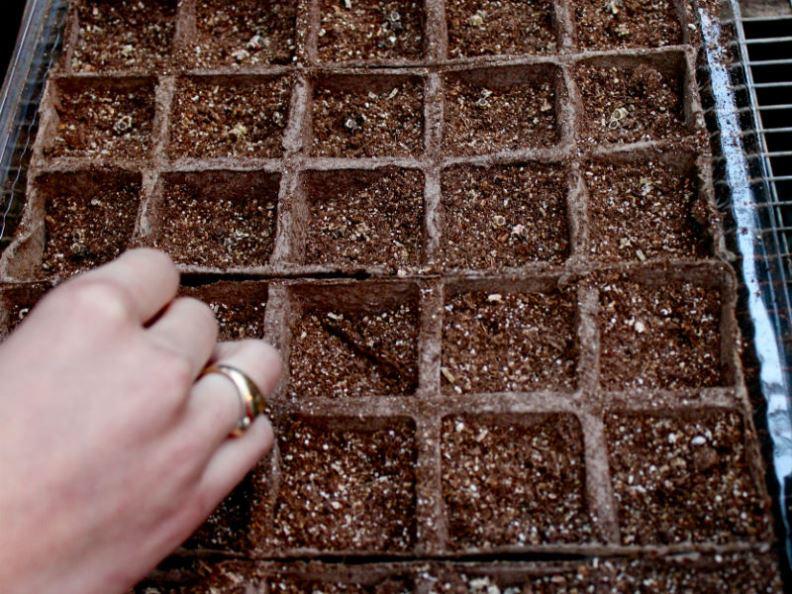 cách trồng cải cầu vồng tại nhà