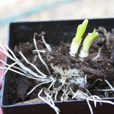 trồng rau sạch từ rác rau