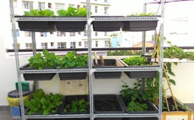 trồng rau trên sân thượng có mái che
