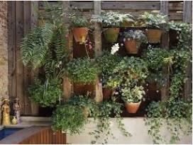 Vườn thẳng đứng cho không gian nhà chật