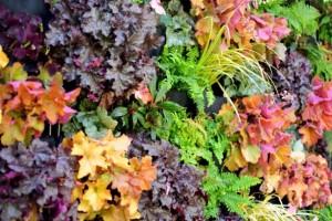Vườn thẳng đứng đa sắc màu