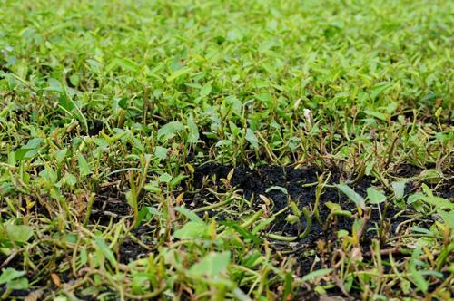 Dân hà nội đang ăn rau xanh mướt giữa nghĩa địaDân hà nội đang ăn rau xanh mướt giữa nghĩa địa
