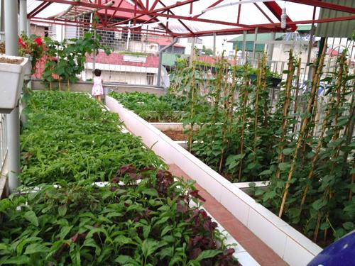 Chăm sóc vườn rau sân thượng