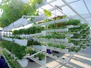 hướng dẫn trồng rau thủy canh