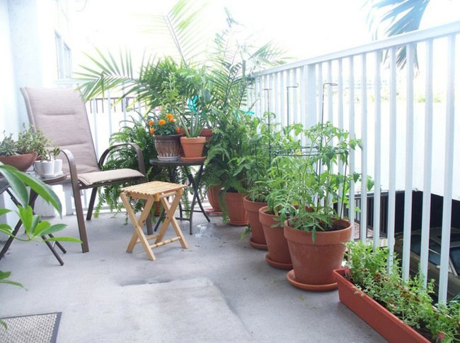 Trồng rau trên sân thượng ăn quanh năm