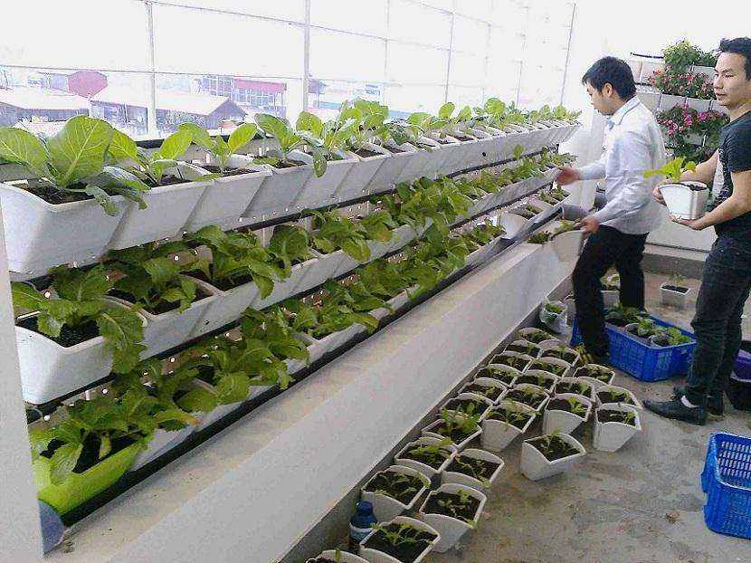 dịch vụ trồng rau tại quận thanh xuân hà nội
