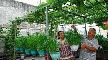 hướng dẫn trồng rau trên sân thượng mái che