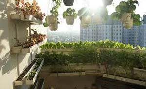 hướng dẫn trồng rau trên sân thượng