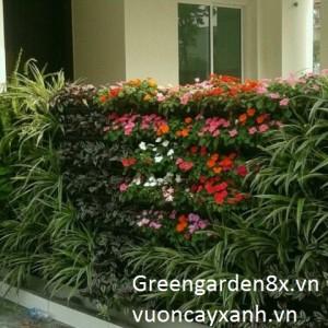 cách chăm sóc vườn thẳng đứng sau khi thi công hoàn thiện