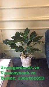 báo giá dịch vụ cho thuê chăm sóc cây xanh cây cảnh văn phòng