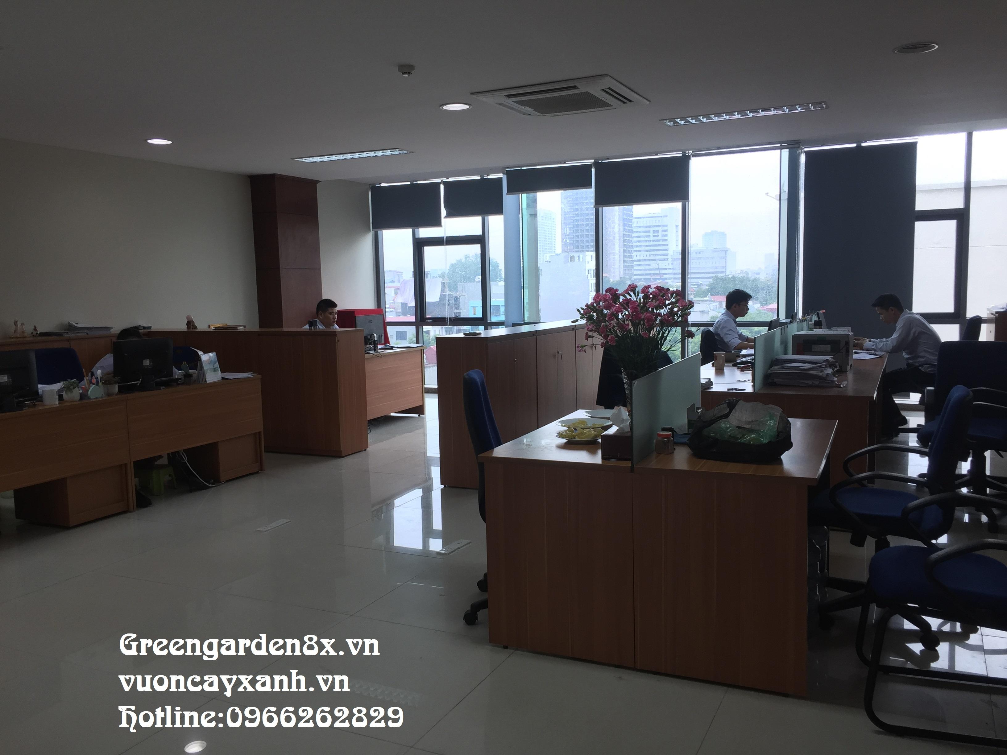 Báo giá dịch vụ cho thuê chăm sóc cây cảnh văn phòng