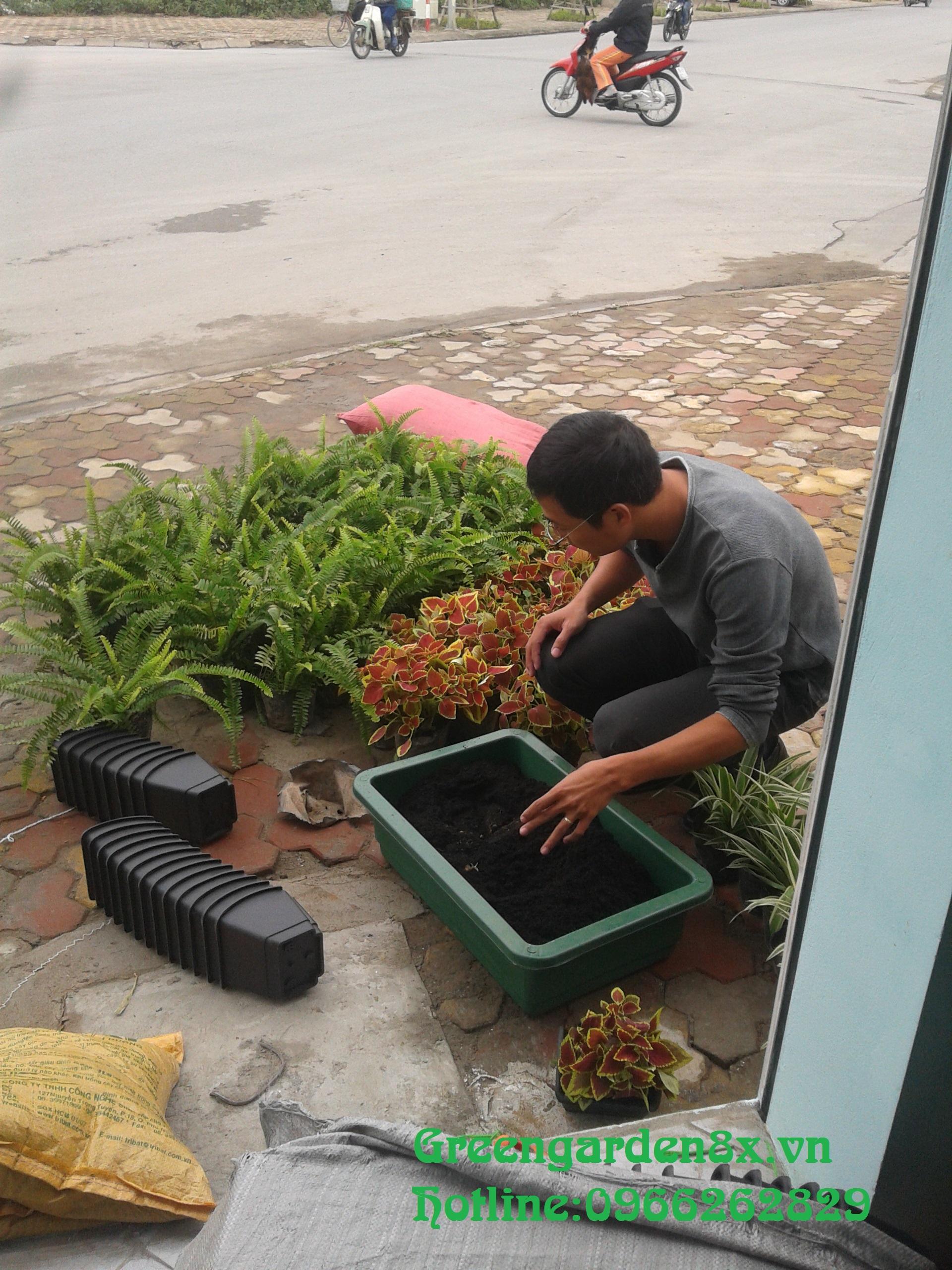 cách thay cây chậu cây vườn thẳng đứng