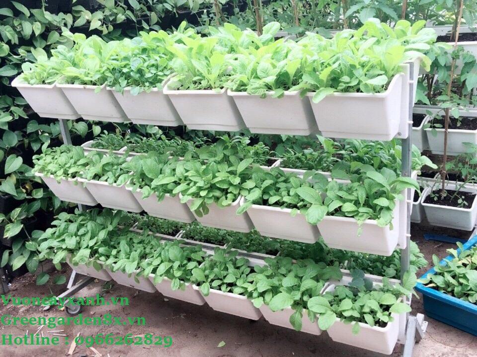 giá trồng rau sạch tại nhà