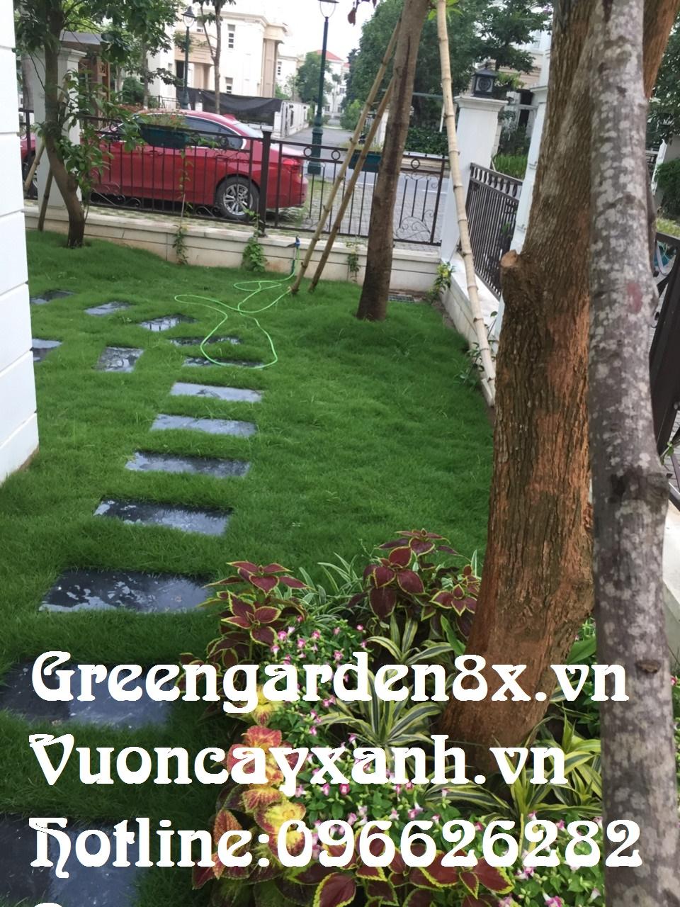 hướng dẫn trồng cỏ nhung, nhật