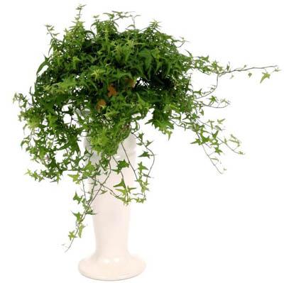 10 loại hoa treo ban công đẹp mê mẩn lòng người