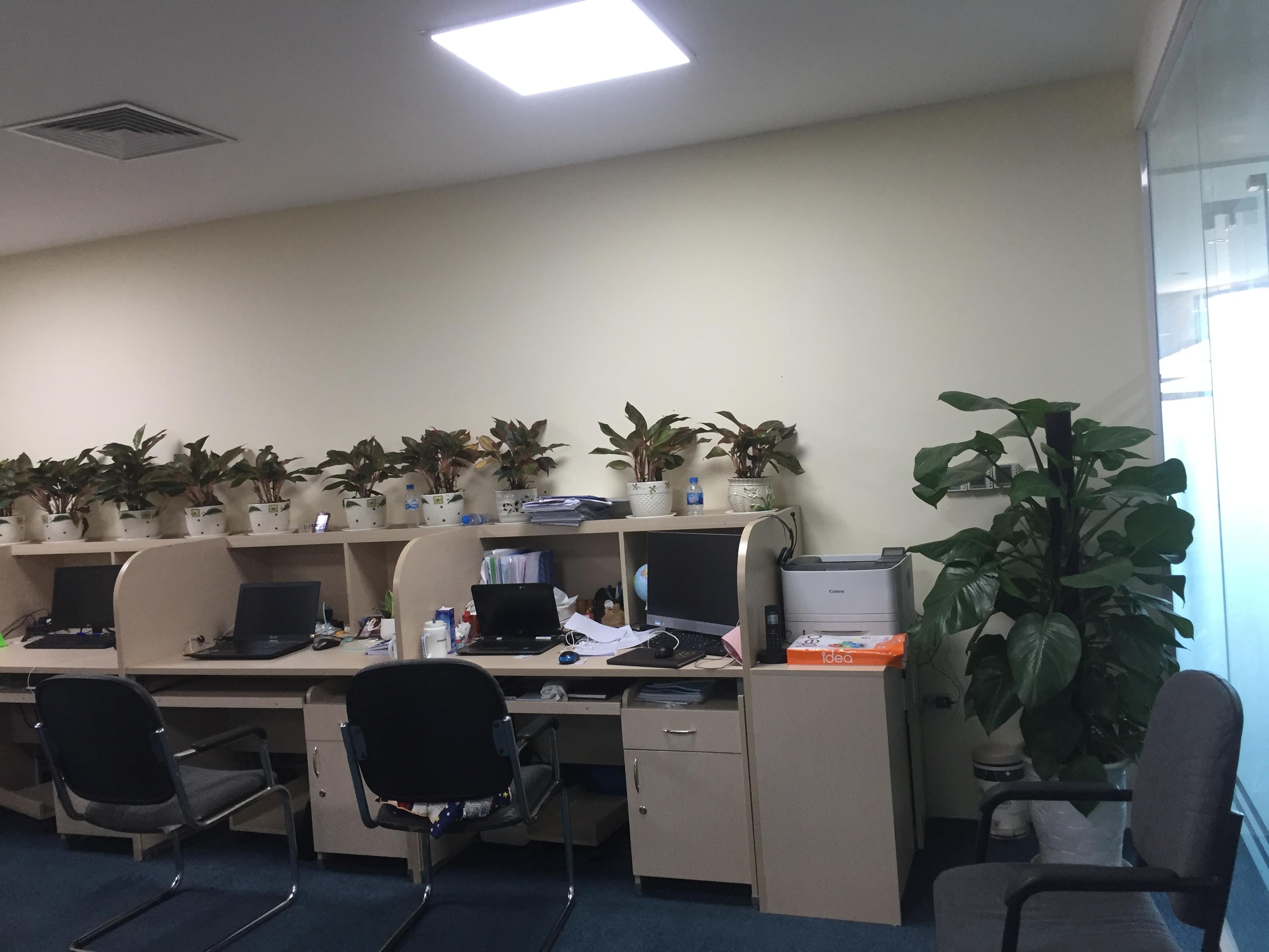 Cho thuê chăm sóc cây cảnh tại 150 phố vọng