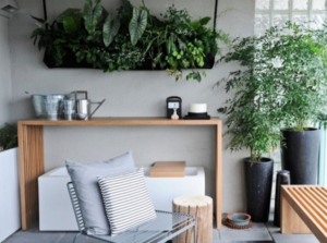 Chọn cây trang trí nội thất cần lưu ý những gì?