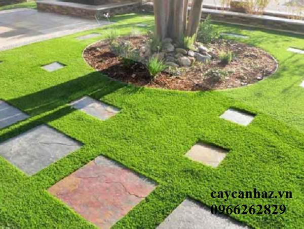 chăm sóc cỏ sân vườn