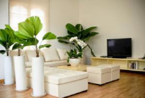 Những lưu ý về phong thủy khi trồng cây trong nhà