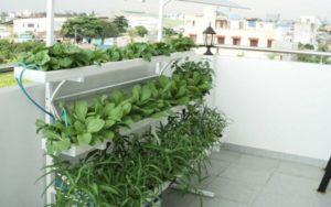 Không gian sân thượng trồng rau