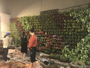 trồng hoa vườn thẳng đứng