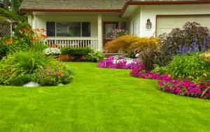 chăm sóc cỏ cây sân vườn